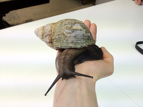 snail in hand